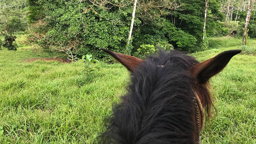 Costa Rica's coolest creatures - horse riding