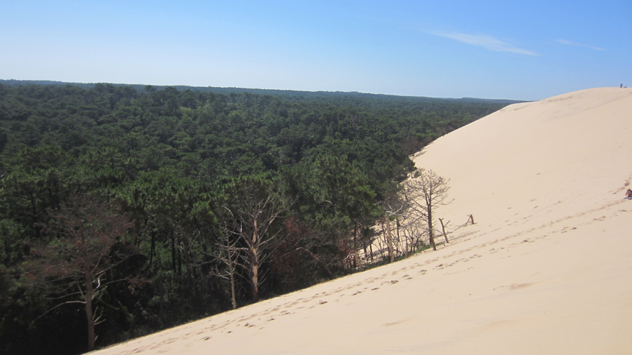 On one side of the dune is a vast forest