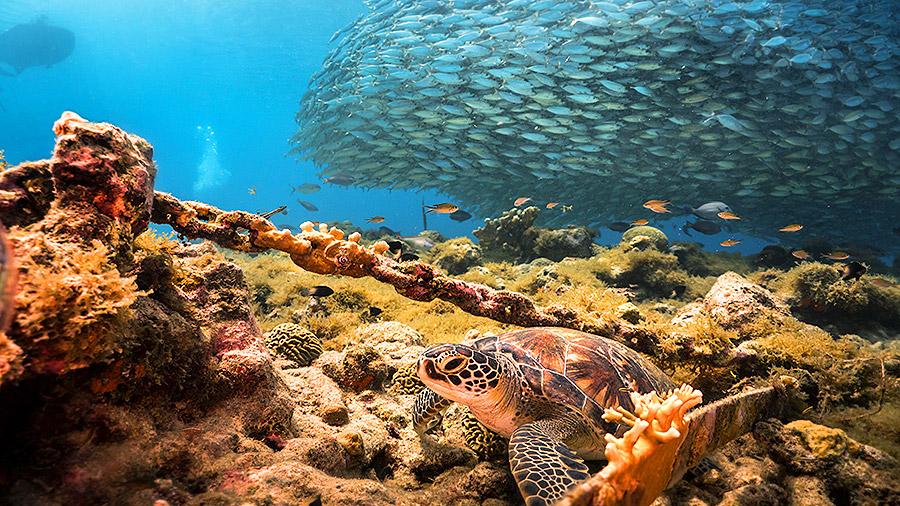 Seven underwater wonders of the Caribbean - Curacao