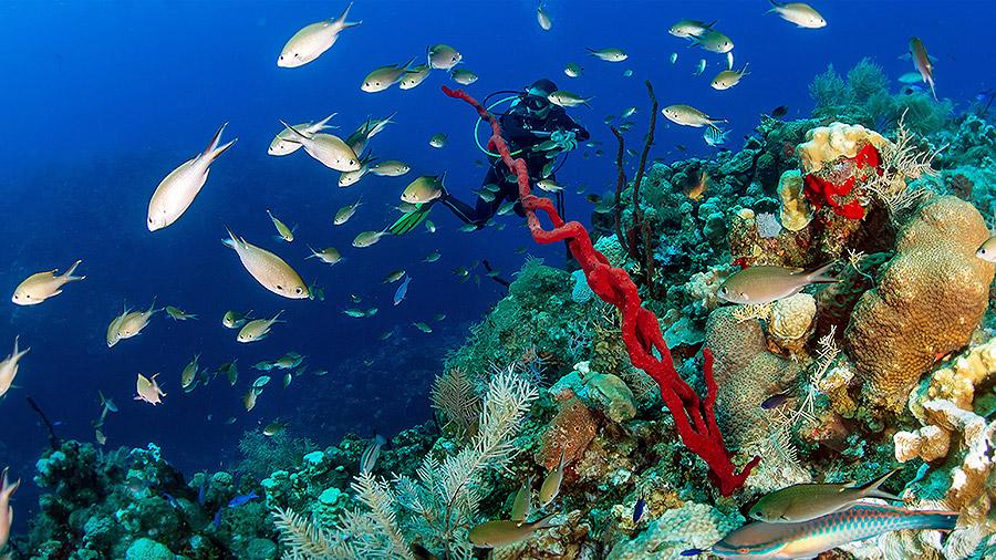Seven underwater wonders of the Caribbean - drop-off cliff in Cayman Islands