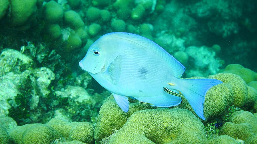 Seven underwater wonders of the Caribbean - fish in Antigua