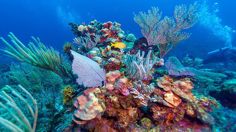 Seven underwater wonders of the Caribbean - Jardines de la Reina, Cuba