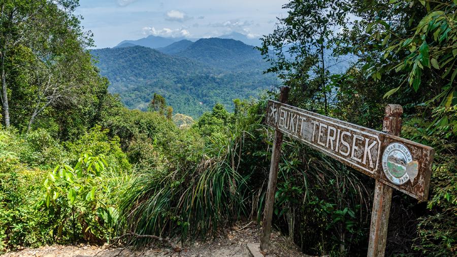 Taman Negara Forest, Malaysia