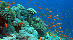 The coral reef gardens that rim Dahab coastline are considered some of the most beautiful and diverse on earth