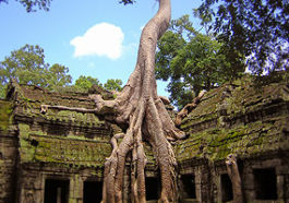 The most popular temple and location for Tomb Raider movie - Ta Prohm, Angkor Wat, Cambodia